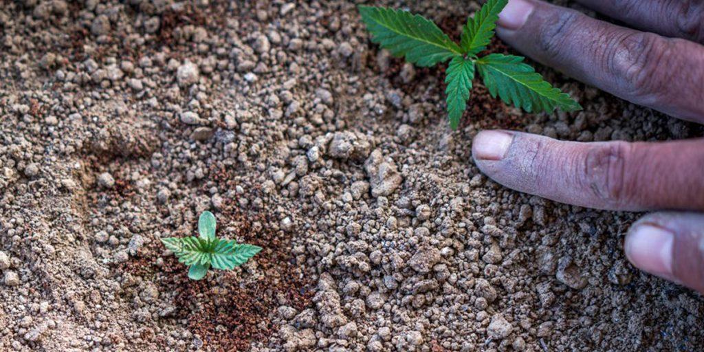 Construire un sol organique parfait pour le cannabis