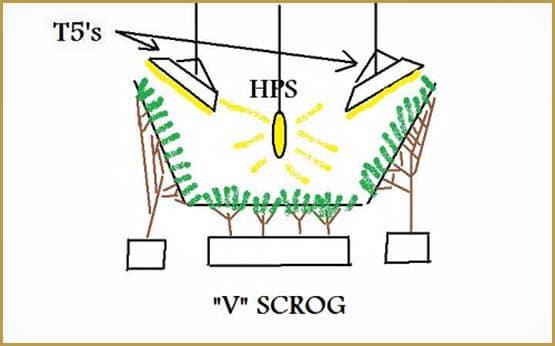 Guide de la méthode SCROG
