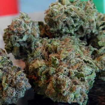 Smile with the Cheese, the popular strain par excellence