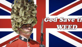 Может ли каннабис легализоваться в Великобритании?