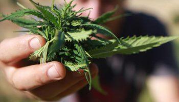 Top Cannabis-banen gezocht in de Verenigde Staten