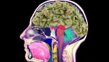 cerveau-cannabis