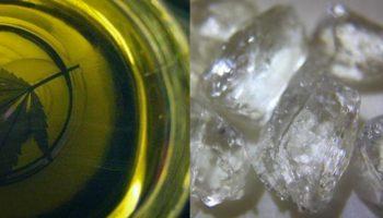 Extraits végétaux complets vs isolats de cannabis