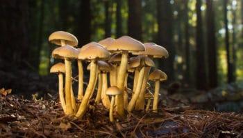 Калифорния на пути к легализации психоделических грибов