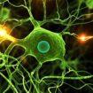 Une nouvelle étude israélienne prouve que le cannabis provoque la mort des cellules cancéreuses
