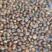 Guide d'identification des graines avant la mise en terre