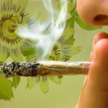 Erbe medicinali che si combinano bene con il fumo