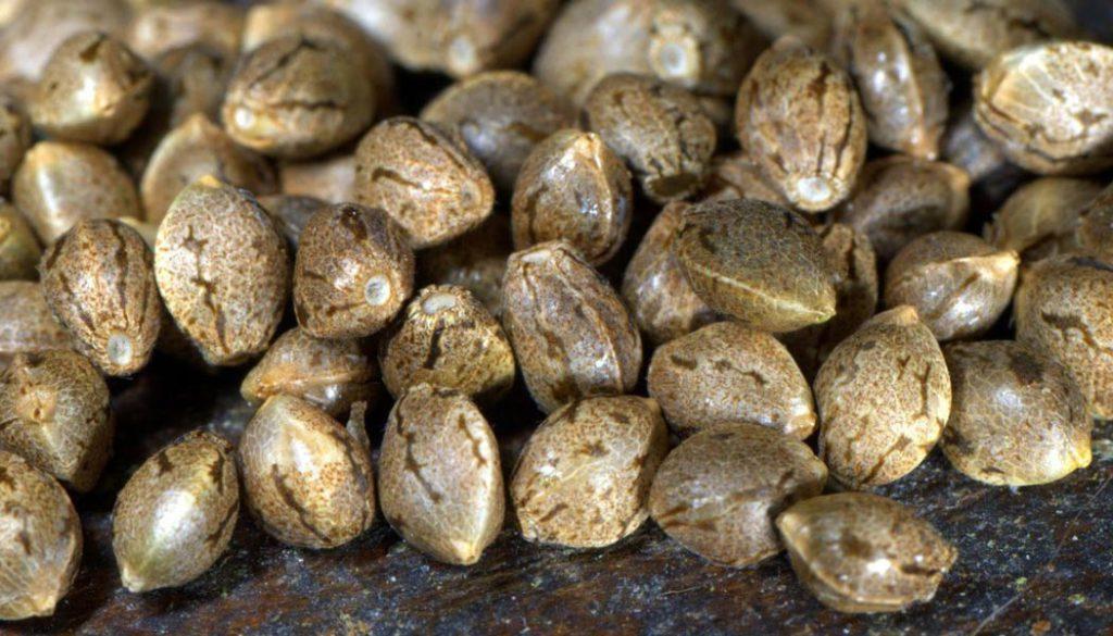 Deux méthodes pour produire ses propres graines