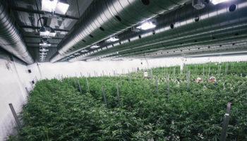 Canopy-Greenhouse-Organa