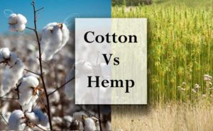 chanvre vs cotton