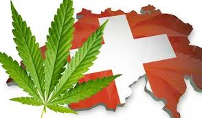 Fine and Disinformation: How States Trample on Cannabis