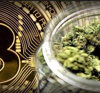 Investissement en bourse: le cannabis plus sûr que le Bitcoin