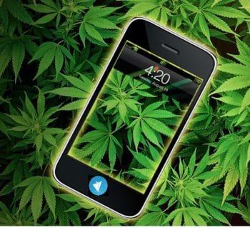 Telegrass, le supermarché du cannabis