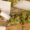 Cannabis VS Tobacco: what is the worst for your lungs