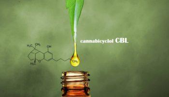Qu'est ce que le CBL?