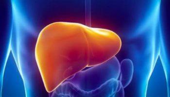 THC et CBD protègent le foie contre les dangers de l'alcool