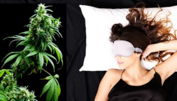 Cannabis tegen slapeloosheid: Australiërs ervaren