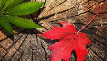 Canada: la légalisation ne sera pas repoussée