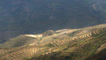 La Thaïlande légalise la production et l'exportation afin de prendre des parts de marché