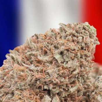 82% of French people say they support medical cannabis