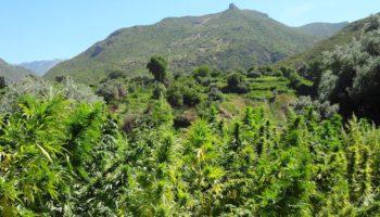 Du Zamal médical pour l'île de la Réunion