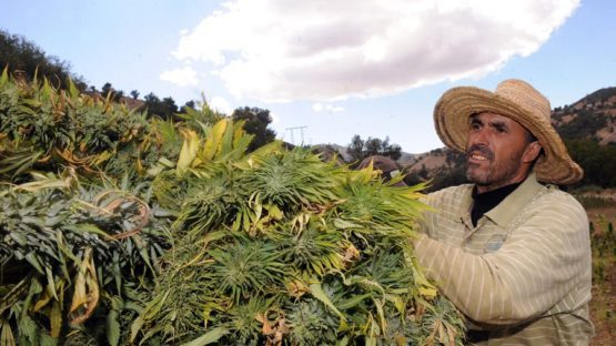 Morocco prohibits kif cultivation