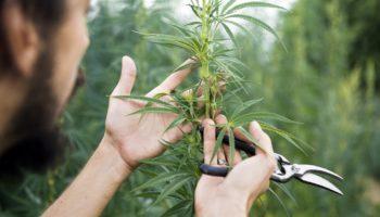 métier ,UQTR,formation cannabis
