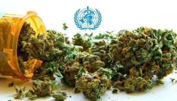 Organisation mondiale de la santé,OICS,ONU,OMS