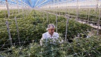 Whistler Medical Marijuana Corp,Mike Gorenstein,Cronos
