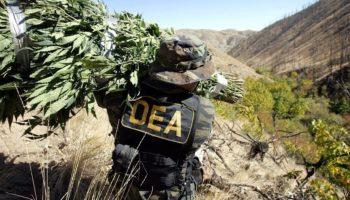 brûler du cannabis,DEA