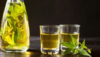 Farmako,bactéries,Zymomonas cannabinoidis,Sel à la chaux THC,tequila