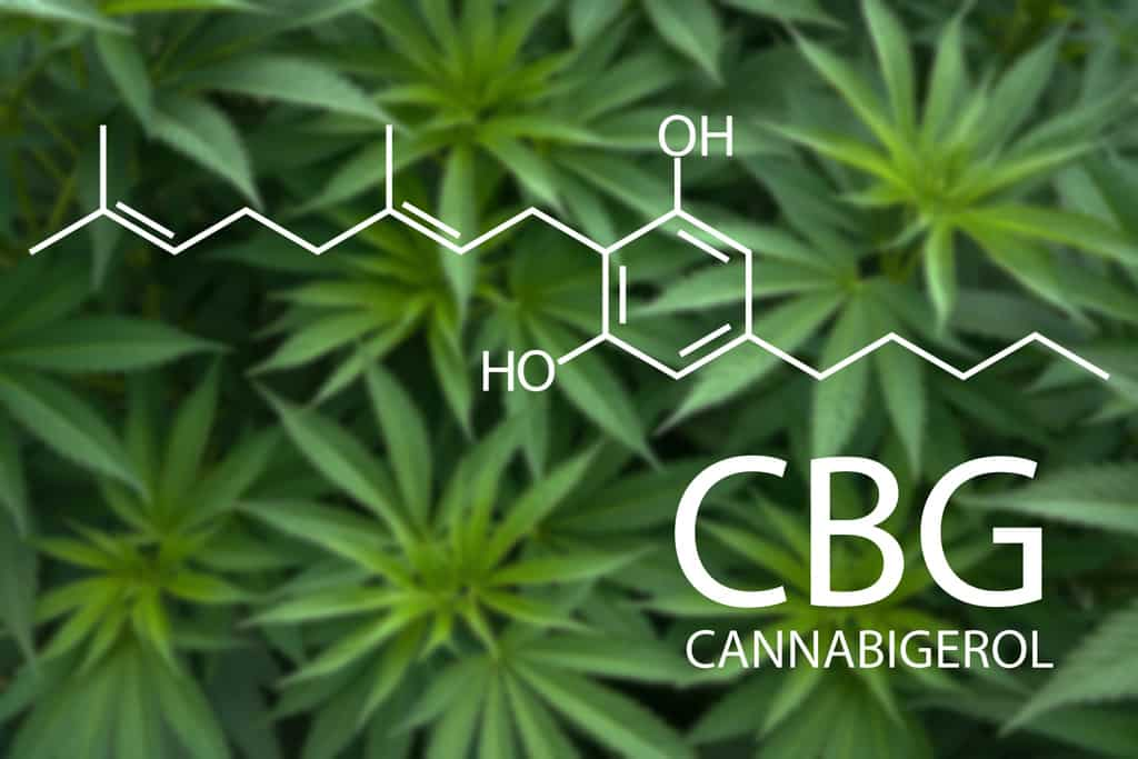 Cannabis magazine Blog news culture and studies of medical cannabis