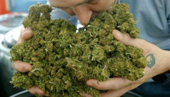 cannabis léger,libéralisation,cannabis light