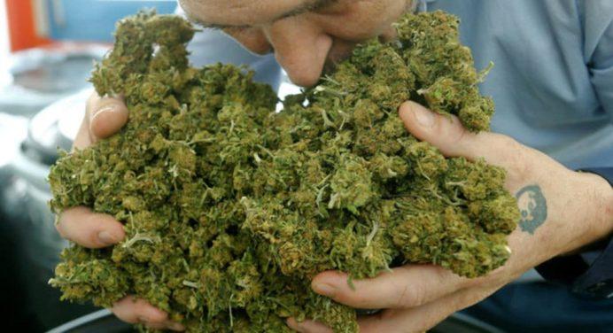 In Italië vermindert cannabislicht de criminaliteit en vermindert het de medicatie