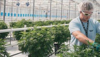 grade universitaire des études scientifiques sur le cannabis médical,Université du Maryland,école de pharmacie