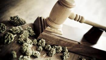 Sénat,réglementation ,Brésil cannabis