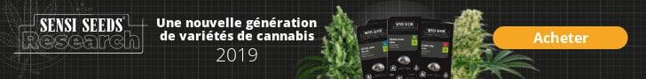 Блог-Cannabis