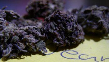 cannabis noir,weed noir