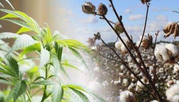 chanvre industriel,Pesticide Action Network,pesticide