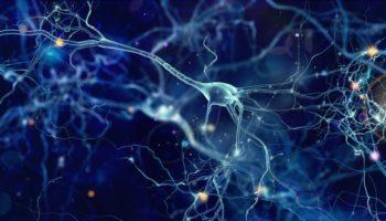 cerveau,scientifiques ,cheval de Troie