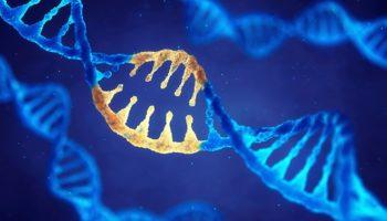 hersenritmes, cannabidiol, Angelman-syndroom
