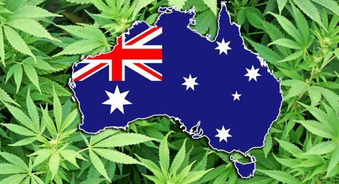 3 miljoen Australische dollars zullen worden toegewezen om medische cannabis te bestuderen