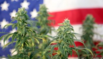 Pew Research Center, legalization