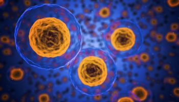 kankercellen, CBC, anti-tumor eigenschappen