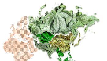indiase cannabis