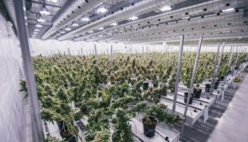 Canopy Growth ferme