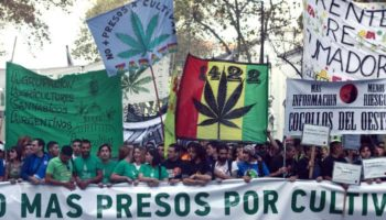 autoproduction ,Argentine cannabis