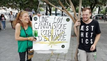 National Assembly, cannabis experimentation in France