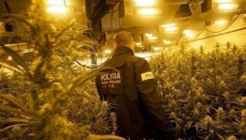 police operation, La Mota, cannabis seeds in Spain