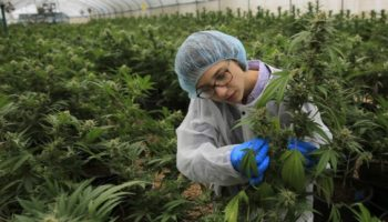 légalisation complète en Israel,non-incrimination,Légalisation en Israël